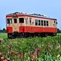 Photos: キハ20 1303と夏の花