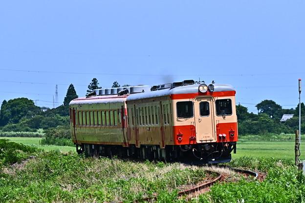 Photos: 101D急行1号キハ52+キハ28