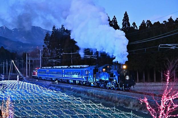 Photos: C11 207SL大樹8号倉ケ崎SL花畑イルミネーション