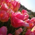 17-04-04-17-12-29-043_photo
