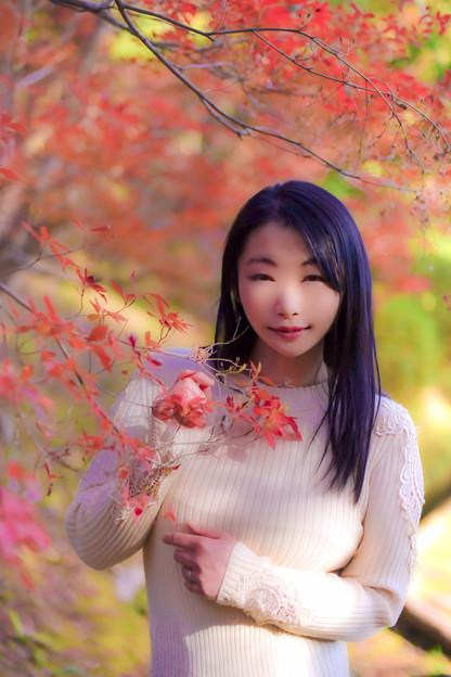 Photos: Sweet maple