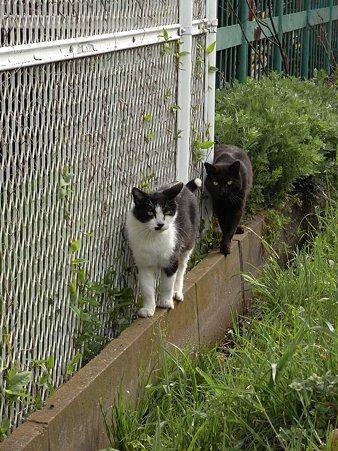 水門猫さん(R0012369)
