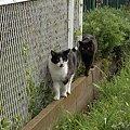 写真: 水門猫さん(R0012369)