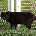 写真: 水門猫さん(R0012381)
