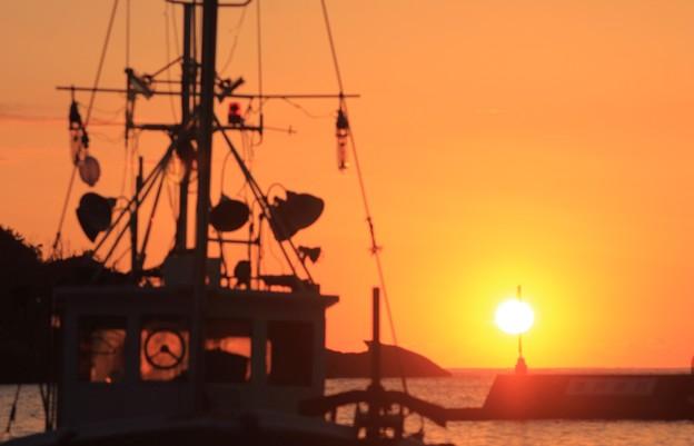 写真: 夕日に照らされて