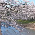 写真: 川と桜