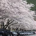 写真: 富士霊園