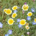 Photos: 花束にしたい
