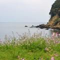 Photos: 浜大根の花と