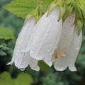 写真: 雨あがりに