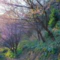 Photos: 早咲き