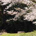 Photos: 花ふぶき