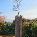 自然の盆栽