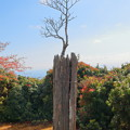 Photos: 自然の盆栽