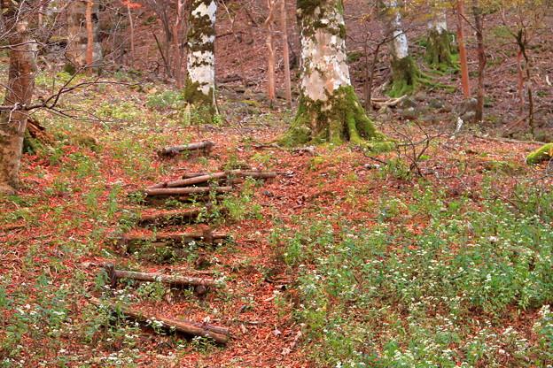 Photos: 淡い紅葉