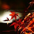 Photos: 好古園の紅葉ライトアップ