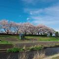 Photos: 小畔川の堤防