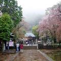 写真: 雨のお詣りも・・・