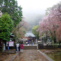 Photos: 雨のお詣りも・・・