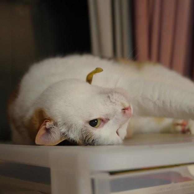 写真: 寝てるでち!