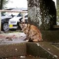 写真: 伊豆山神社の猫さん