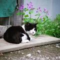 写真: 仔猫のママさん