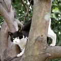 写真: 木登りうし柄2