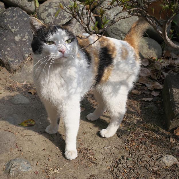 門前の猫さん