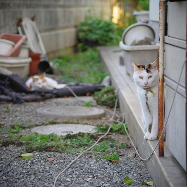 裏庭では・・・
