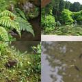 Photos: 萬徳寺の自然