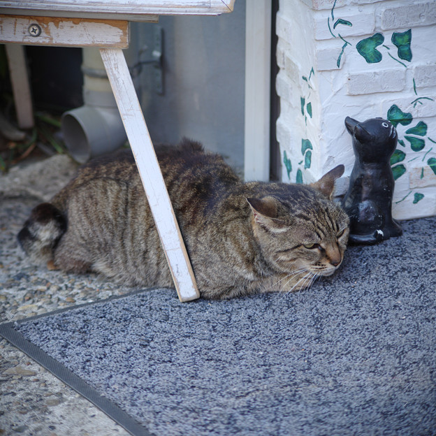 Photos: 看板猫さん