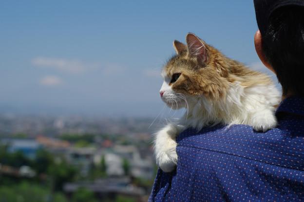 富士山は、こっちニャ^^