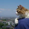 写真: 富士山は、こっちニャ^^