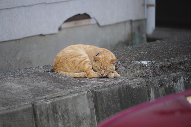Photos: 色違い眠り猫