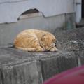 写真: 色違い眠り猫