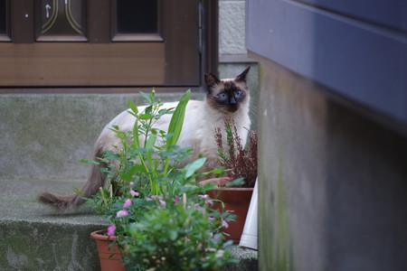 こんな猫さんも