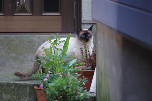 写真: こんな猫さんも