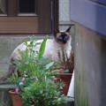 Photos: こんな猫さんも