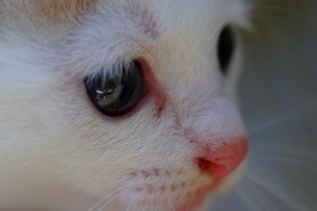 可愛い猫さんね