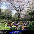 写真: 春のひととき