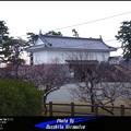 Photos: 小田原城・はるのひととき