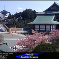 Photos: 成田山新勝寺の春