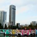 写真: 上野不忍池