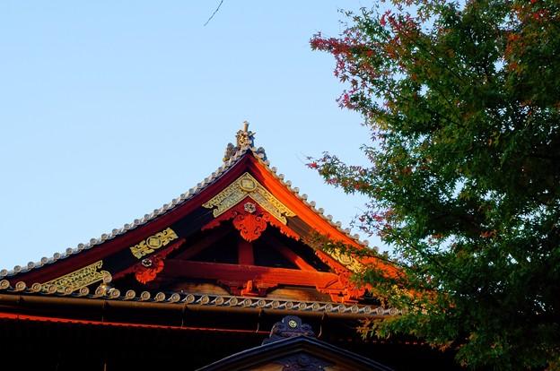 寛永寺 清水観音堂