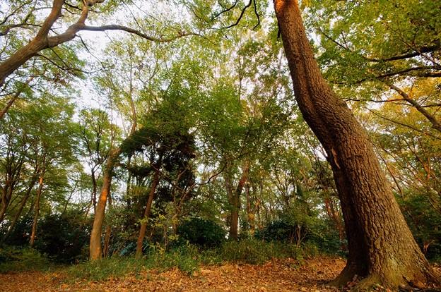 小塚山公園
