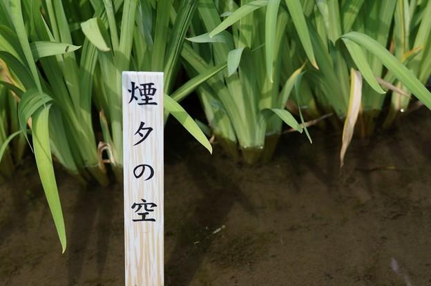 写真: 花菖蒲 煙夕の空