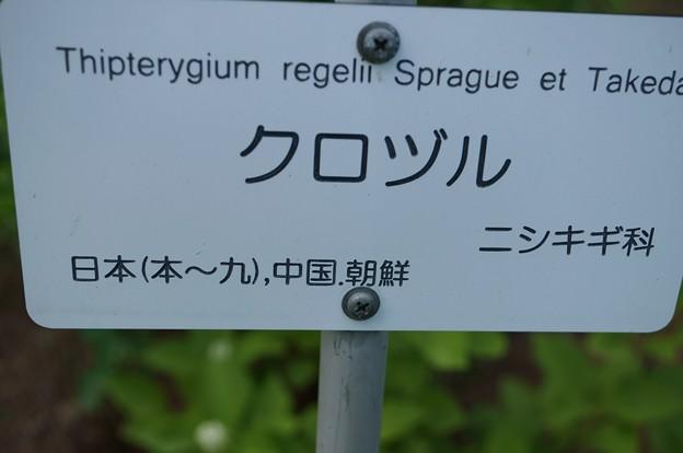 黒蔓(クロヅル)