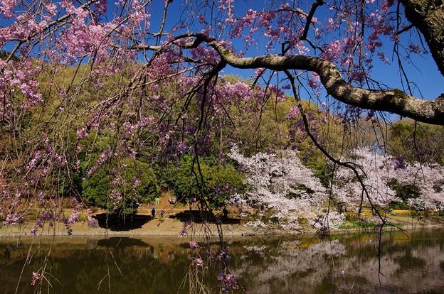 じゅんさい池緑地