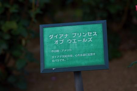 薔薇 ダイアナ・プリンセス・オブ・ウェールズ