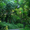 Photos: 水元公園